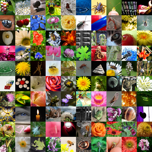 100 beautiful photos