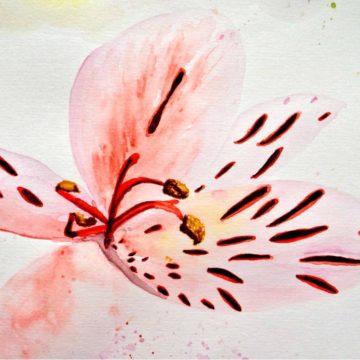 5: Peruvian Lily