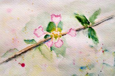 11: Rare Bloom