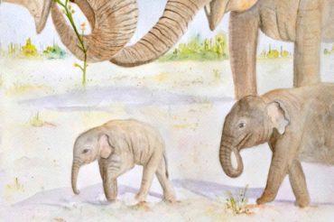 33: Elephant Family