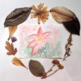 Poinsettia_harmonythoughts