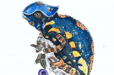 Slippery Chameleon